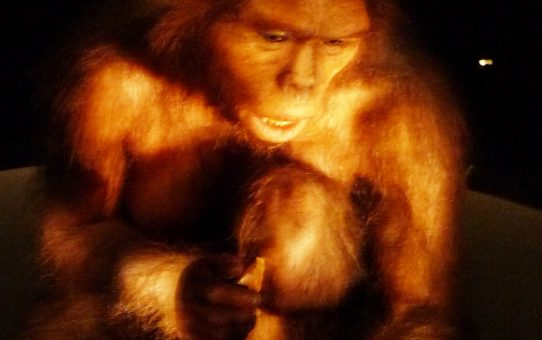Atapuerca: los homínidos tal como éramos
